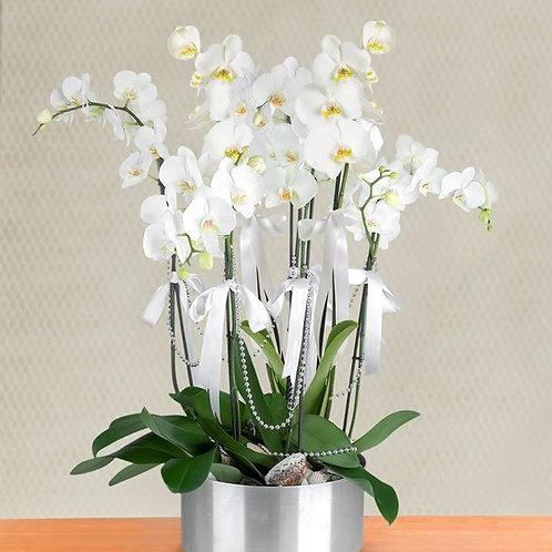 7 Dal Beyaz Orkide