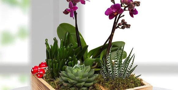 Mini Orkide ve Sukulent Bahçesi