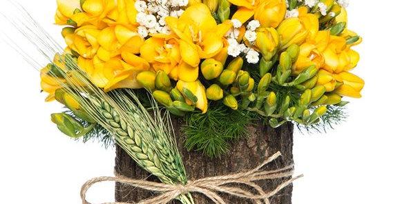 Doğal Kütükte Sarı Frezyalar