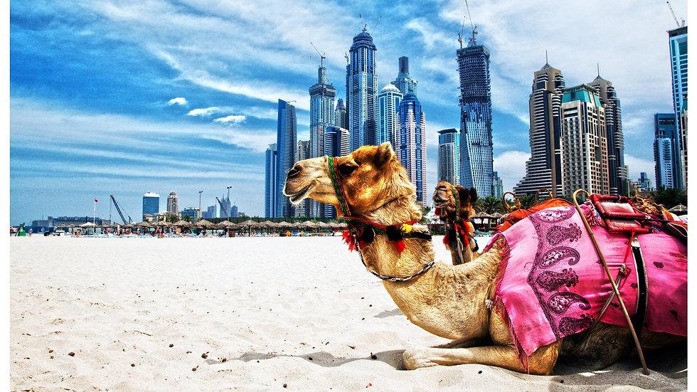 Desierto de Dubái: barbacoa, sandboarding y paseo en camello EXCURSIÓN DE UN DÍA