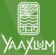 yaaxlum.png