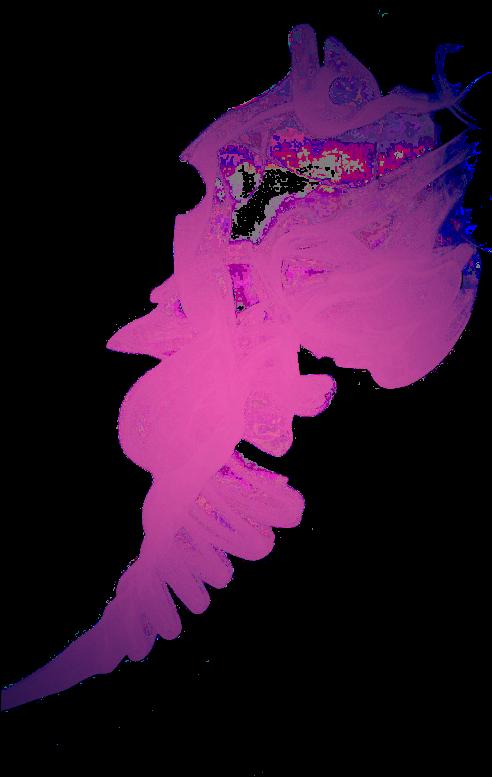 31-310528_smoke-humo-colorfull-color-col