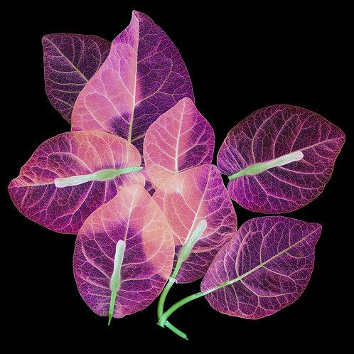 Flora - Purple Skeletal