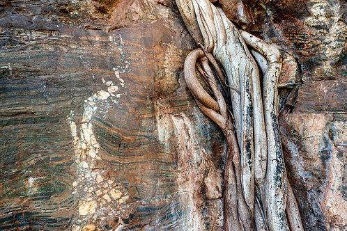 Karijini National Park - Dales Gorge