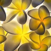Franjipani Kaleidoscope