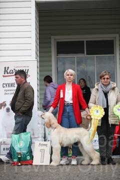 Dog Show-530.jpg