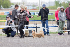 Dog Show-489.jpg