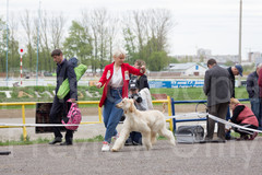Dog Show-494.jpg