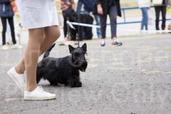 Dog Show-39.jpg