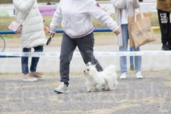 Dog Show-32.jpg