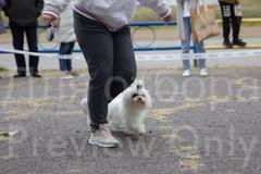 Dog Show-34.jpg