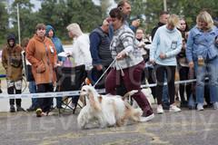 Dog Show-18.jpg