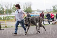 Dog Show-503.jpg