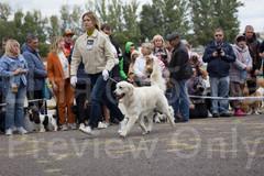 Dog Show-17.jpg