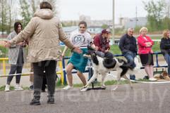Dog Show-514.jpg