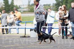 Dog Show-9.jpg