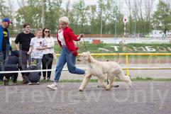 Dog Show-511.jpg