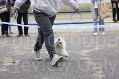 Dog Show-33.jpg