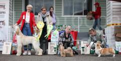 Dog Show-524.jpg