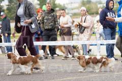 Dog Show-10.jpg