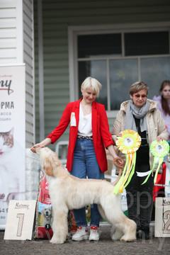 Dog Show-525.jpg