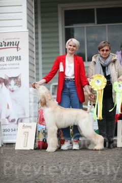 Dog Show-526.jpg