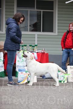 Dog Show-533.jpg
