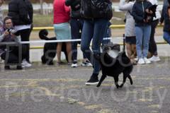 Dog Show-6.jpg