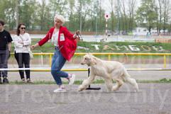 Dog Show-497.jpg