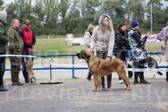 Dog Show-27.jpg