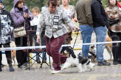 Dog Show-24.jpg