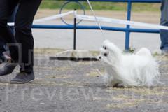Dog Show-22.jpg