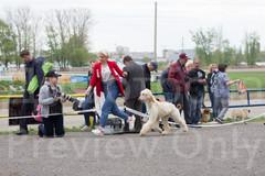 Dog Show-493.jpg