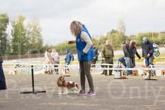 Dog Show-11.jpg