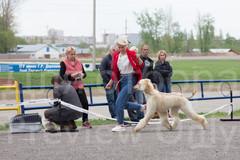 Dog Show-495.jpg