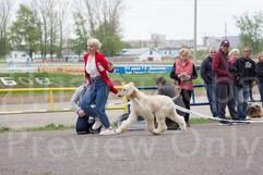Dog Show-496.jpg