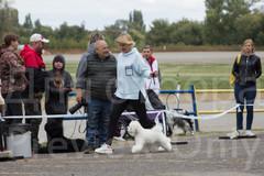 Dog Show-19.jpg
