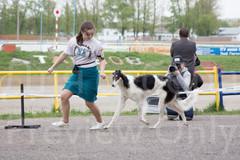 Dog Show-508.jpg