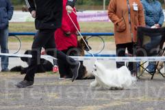 Dog Show-20.jpg