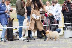 Dog Show-26.jpg