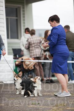 Dog Show-46.jpg