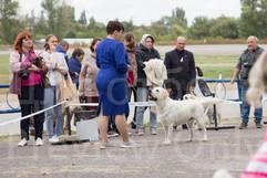 Dog Show-36.jpg