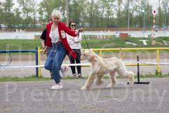 Dog Show-498.jpg