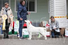 Dog Show-534.jpg