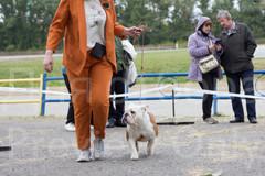 Dog Show-31.jpg