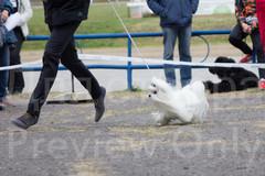 Dog Show-21.jpg