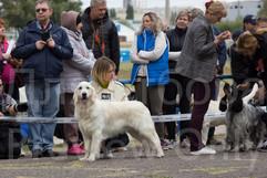 Dog Show-16.jpg