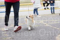 Dog Show-37.jpg