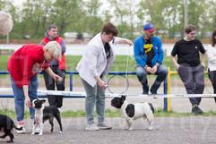 Dog Show-487.jpg