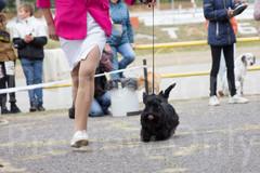 Dog Show-38.jpg